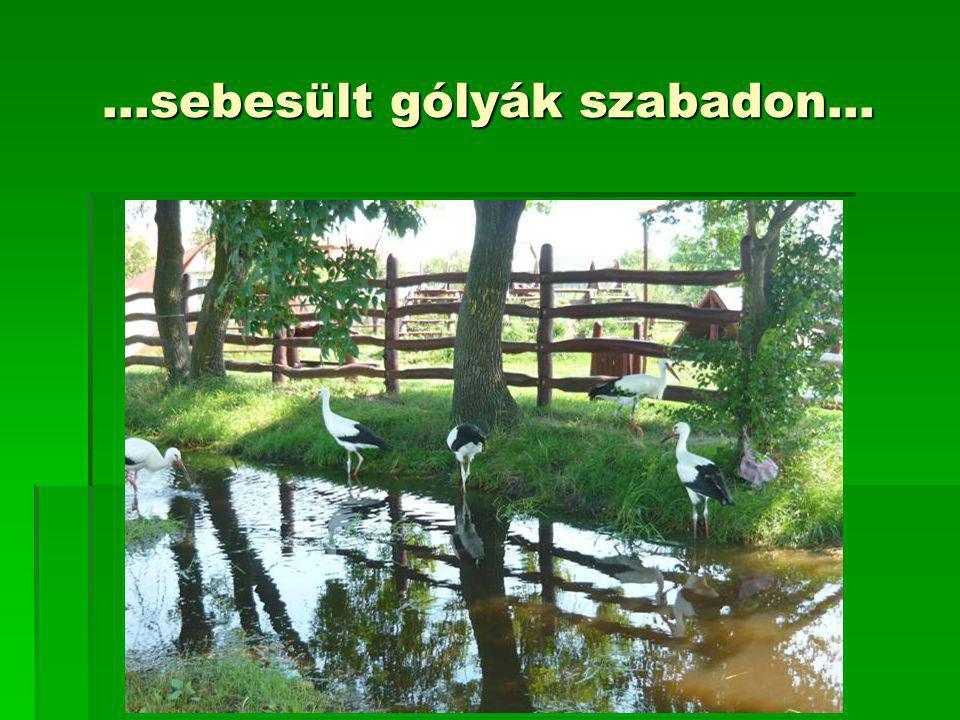 …sebesült gólyák szabadon…