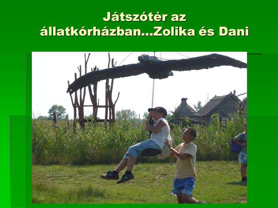 Játszótér az állatkórházban…Zolika és Dani