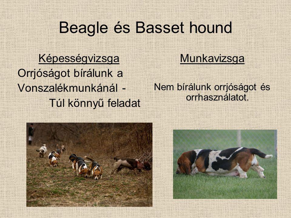 Beagle és Basset hound Képességvizsga Orrjóságot bírálunk a Vonszalékmunkánál - Túl könnyű feladat Munkavizsga Nem bírálunk orrjóságot és orrhasználat