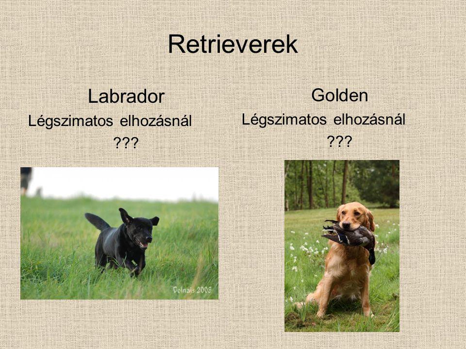 Retrieverek Labrador Légszimatos elhozásnál ??? Golden Légszimatos elhozásnál ???