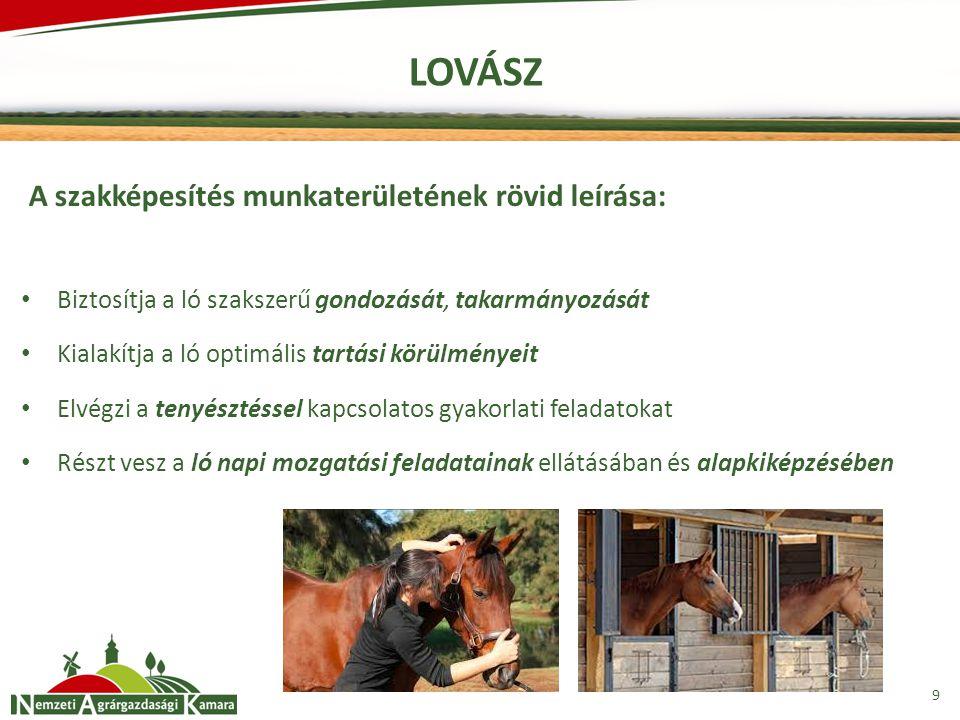 10 LOVÁSZ A szakképesítéssel rendelkező képes: kiválasztani a megfelelő takarmányokat és összeállítani a takarmány adagokat kialakítani az istálló és környezetének rendjét megszervezni és végrehajtani a lovak mindennapi mozgatását és jártatását segédkezni a ló egészségügyi ellátásában, a beteg és sérült állat gondozásában elvégezni a kancák próbáltatását és közreműködni a termékenyítésben felismerni a közeledő ellés jeleit, szakszerű segítséget nyújtani az ellésnél felkészíteni a lovat bemutatókra, vizsgákra, bírálatokra illetve aukciókra előkészíteni a lovat futószáras, nyereg alatti illetve fogatban történő használatra végrehajtani a ló munka utáni ápolását, gondozását