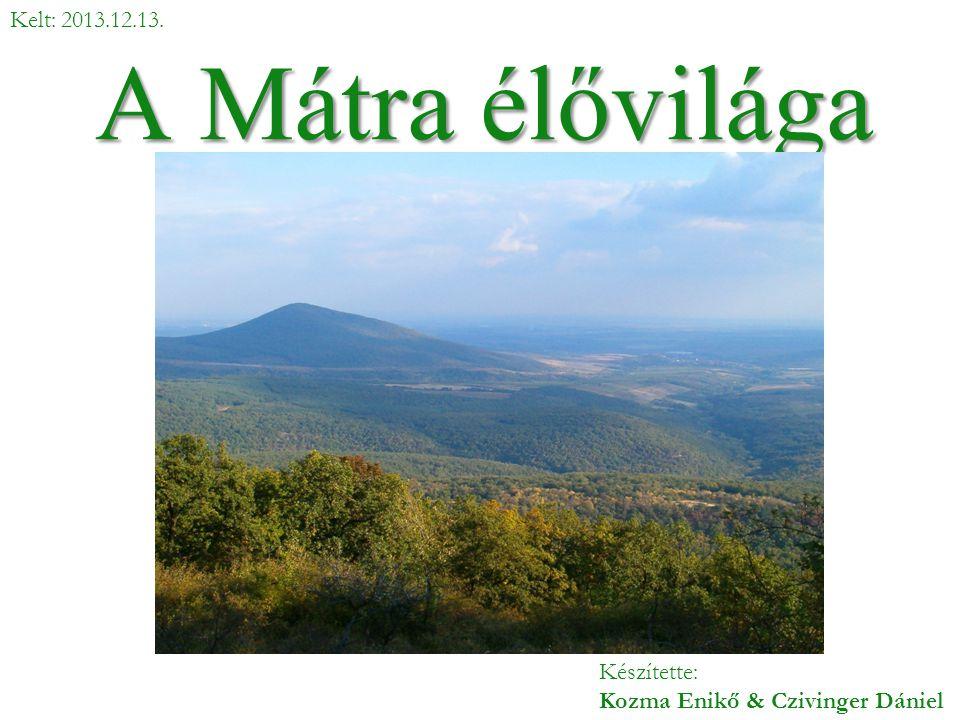 A Mátra élővilága Készítette: Kozma Enikő & Czivinger Dániel Kelt: 2013.12.13.