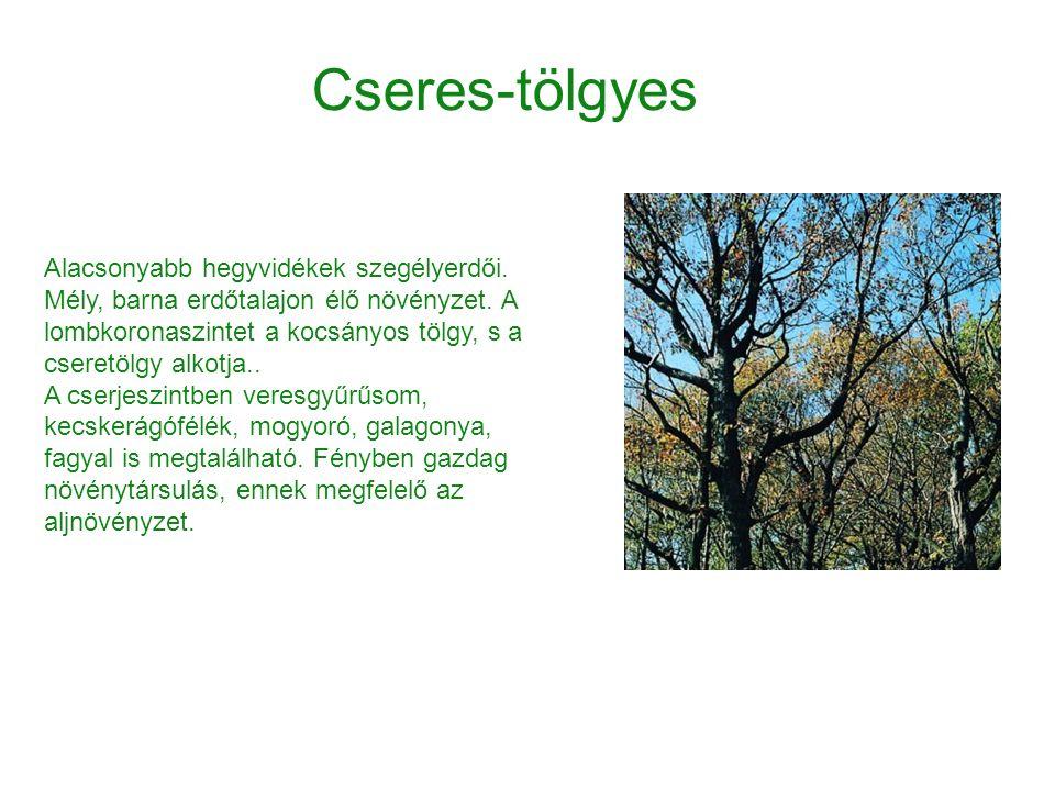 Alacsonyabb hegyvidékek szegélyerdői. Mély, barna erdőtalajon élő növényzet. A lombkoronaszintet a kocsányos tölgy, s a cseretölgy alkotja.. A cserjes