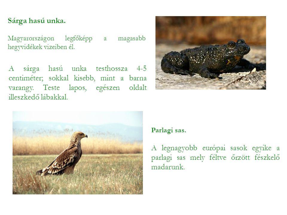 Sárga hasú unka. Magyarországon legfőképp a magasabb hegyvidékek vizeiben él. A sárga hasú unka testhossza 4-5 centiméter; sokkal kisebb, mint a barna