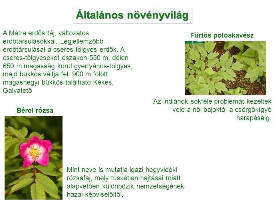 Általános növényvilág A Mátra erdős táj, változatos erdőtársulásokkal. Legjellemzőbb erdőtársulásai a cseres-tölgyes erdők. A cseres-tölgyeseket észak
