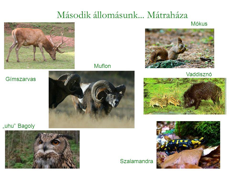Páfrány Csörgő patak fái A gyertyános–tölgyes Magyarországon a 400 m és 600 m közötti magasságok legjellemzőbb erdőtípusa.
