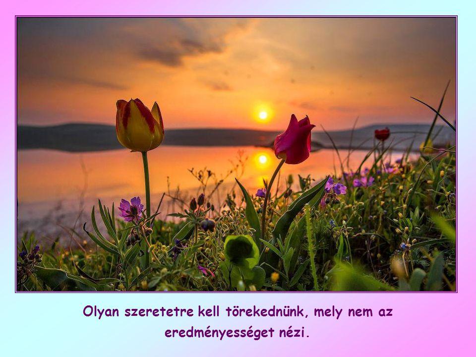 Arra fogunk tehát törekedni, hogy elsőként, nagylelkűen, együttérzéssel szeressünk, hogy szeretetünk nyitott legyen mindenki iránt, de főleg azok irán