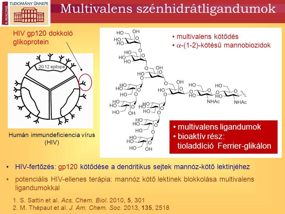 Multivalens szénhidrátligandumok HIV-fertőzés: gp120 kötődése a dendritikus sejtek mannóz-kötő lektinjéhez potenciális HIV-ellenes terápia: mannóz kötő lektinek blokkolása multivalens ligandumokkal Humán immundeficiencia vírus (HIV) HIV gp120 dokkoló glikoprotein multivalens kötődés  -(1-2)-kötésű mannobiozidok multivalens ligandumok bioaktív rész: tioladdíció Ferrier-glikálon 1.