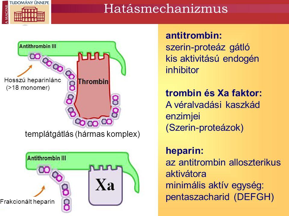 heparinkötő hely aktív hely Hatásmechanizmus templátgátlás (hármas komplex) Hosszú heparinlánc (>18 monomer) Frakcionált heparin antitrombin: szerin-proteáz gátló kis aktivitású endogén inhibitor trombin és Xa faktor: A véralvadási kaszkád enzimjei (Szerin-proteázok) heparin: az antitrombin alloszterikus aktivátora minimális aktív egység: pentaszacharid (DEFGH)