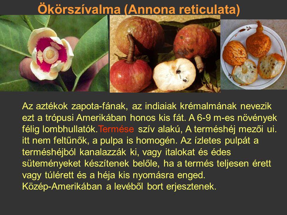 Csirimoja, krémalma (Annona cherimola) Peruban és Mexikóban az indiánok ősidők óta jól ismerik. Termése: a termőlevelek megporzás után összenőnek, és