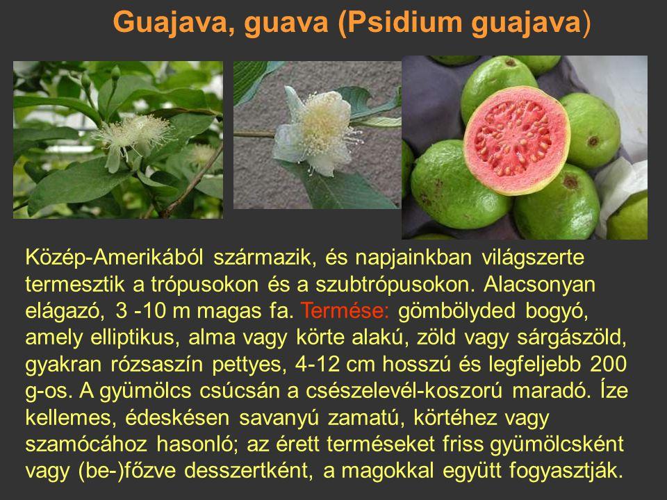 Gyömbéralma, cukoralma (Annona squamosa) A trópusi Amerikából származik, és meleg klímájú területeken él. Az egyik legízletesebb Annona faj, ezt is a