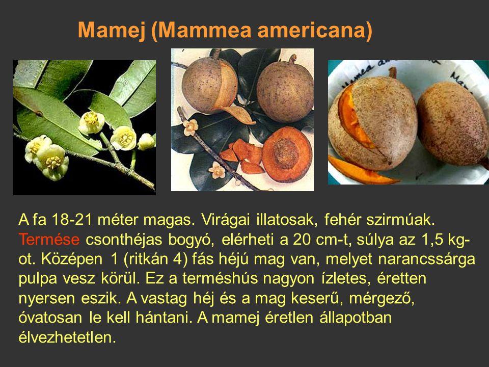 Mirtuszalma, jambóza (Syzygium jambos) Örökzöld, cserje vagy fa, elérheti a 12 m magasságot. A virágban a 4 szirom krémfehér vagy sárgászöld, a 200-40