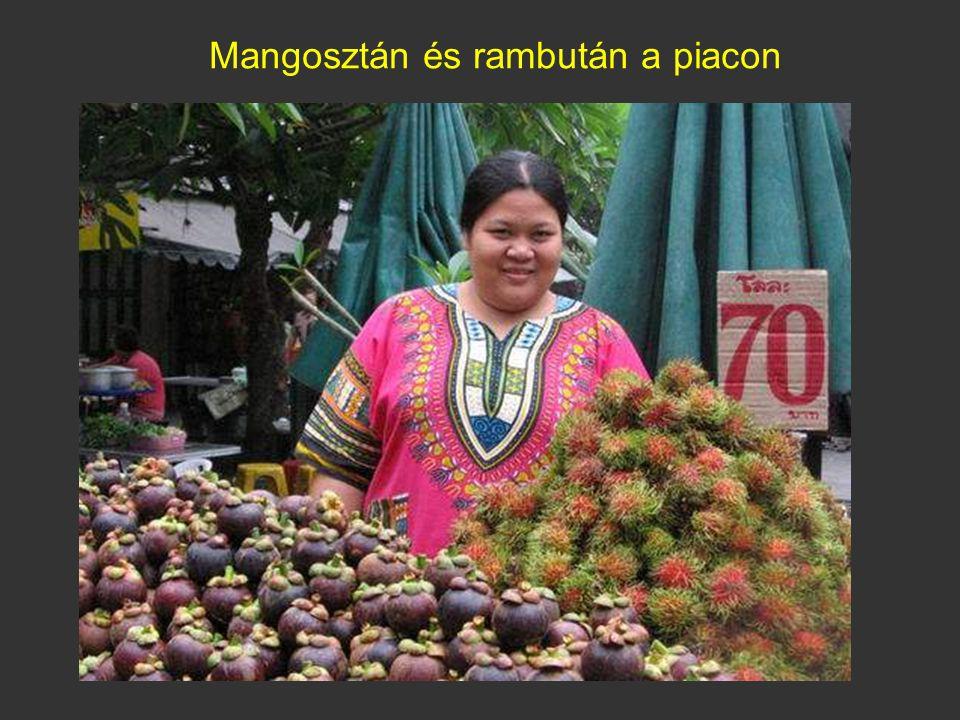Rambután (Nephelium lappaceum) A Maláj-félsziget esőerdeiben honos, Délkelet-Ázsiában széles körben termesztik. Maximum 25 m magas, egy- vagy kétlaki