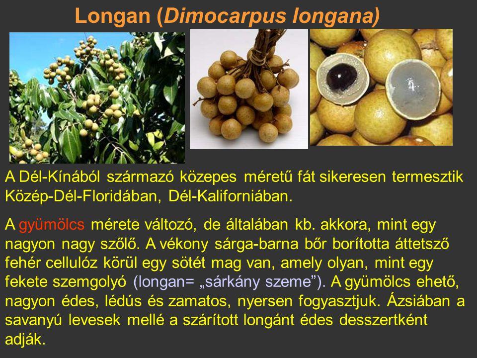 Langszat, duku (Lansium domesticum) Dél-Thaiföldről és Nyugat-Malajziából származik. Örökzöld fa, amely gyantás tejnedvet tartalmaz.Termése: a gömböly