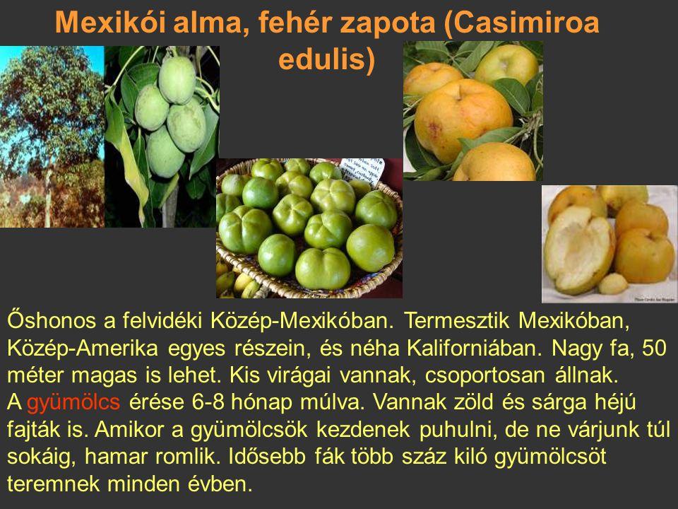 Longan és rambutanlangszat és dzsekfrut mangosztan,marakuja, kiwano, pitahaya narancs, gyömbéralma, papaja Gyümölcsméretek összehasonlítása