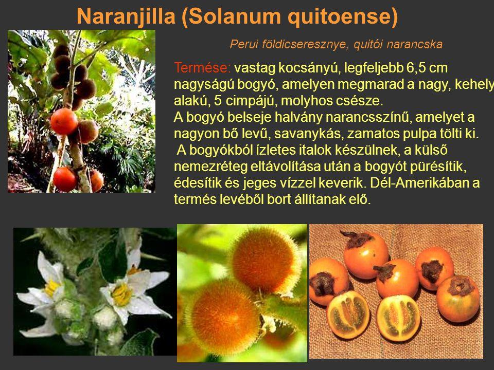 Paradicsomfa (Cyphomandra betacea) Peruból származó cserje. A paradicsom közeli rokona. Csúcsos végű tojásdad, sárgás piros, a paradicsomtól eltérő íz