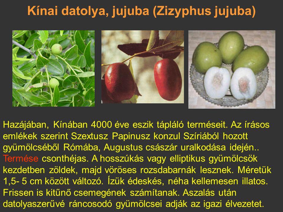 Bilimbi (Averrhoa bilimbi) A bogyók csomókban fejlődnek a törzsön. A fehéres terméshús megérve lágy, bő levű és nagyon savanyú ízű; legfeljebb 10, lap