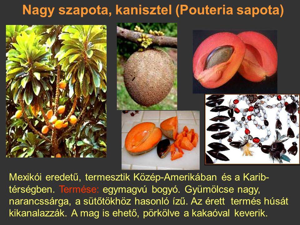 Mirtuszdió (Feijoa sellowiana) Brazília déli részén, Paraguayban, Uruguayban őshonos, de meghonosították Dél-Európában is. Termése 5 cm hosszú, színe