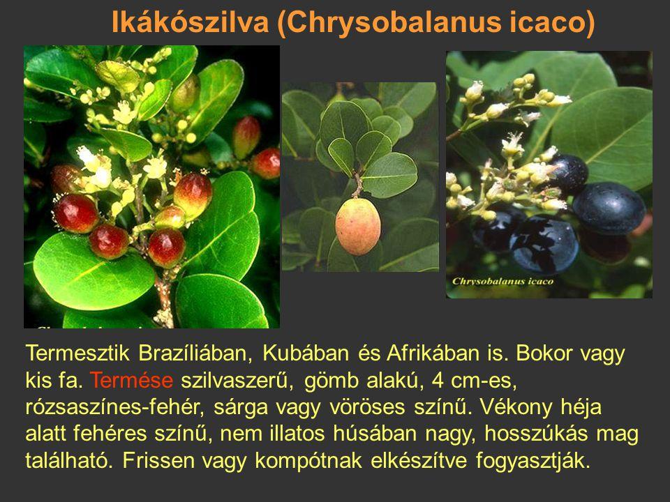 Csillagalma, kaimito (Chrysophyllum caimito) 2,5-3 m magas, bokros cserje; Ny-Indiában és D-Amerikában vadon is nő. Termése: rövid kocsányú bogyó, átm
