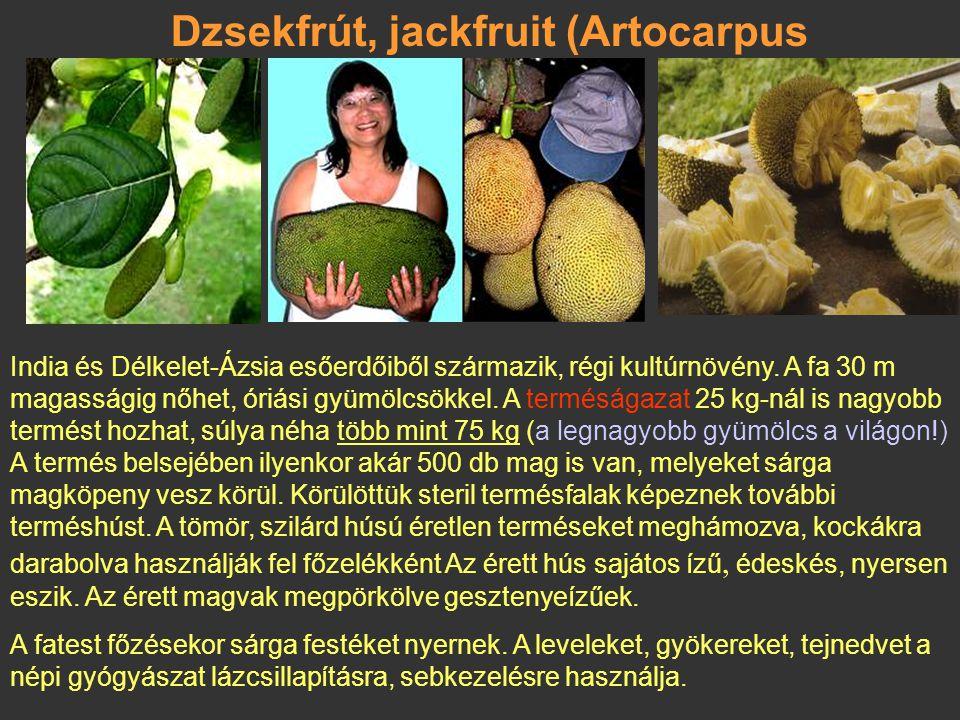 Kenyérfa (breadfruit) – Artocarpus altilis Az eperfélékhez (Moraceae) tartozó, 25 m magas örökzöld, kétlaki fa. Minden része fehér tejnedvet (latex) t
