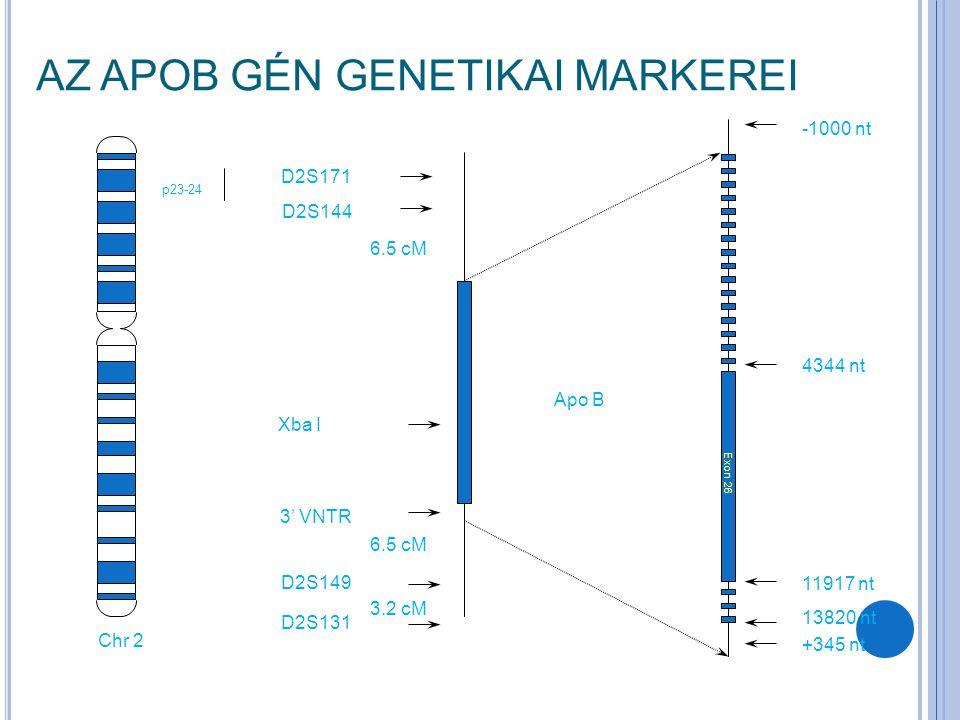 p23-24 Chr 2 4344 nt 11917 nt 13820 nt -1000 nt +345 nt D2S171 D2S149 D2S131 D2S144 3' VNTR Apo B Xba I Exon 26 6.5 cM 3.2 cM AZ APOB GÉN GENETIKAI MARKEREI