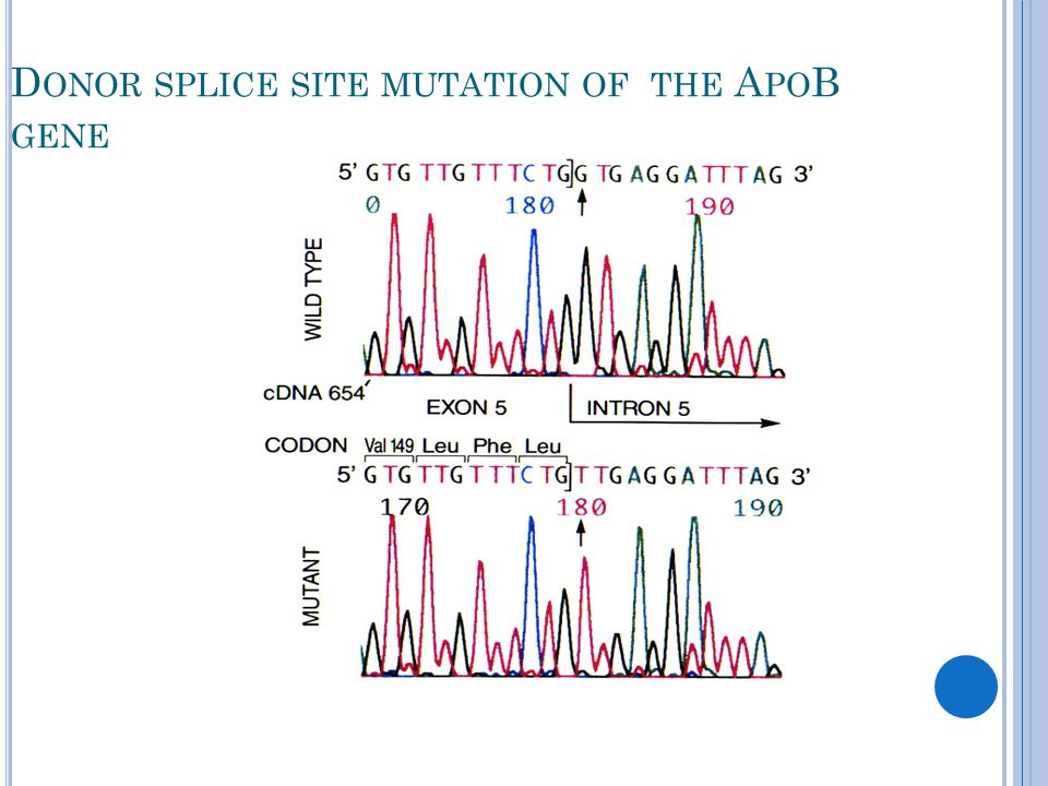 D ONOR SPLICE SITE MUTATION OF THE A PO B GENE