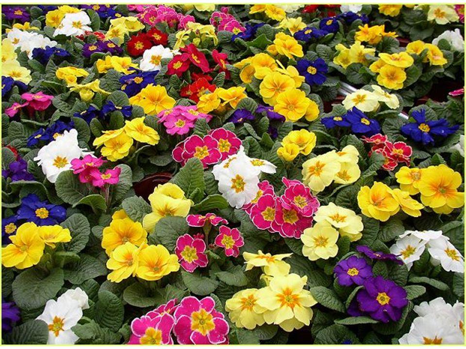 Dalt zengnek a rétek, s minden virág, oly boldog már szívem, Dalt zengnek a rétek, s minden virág, az Úrban van az örömem.