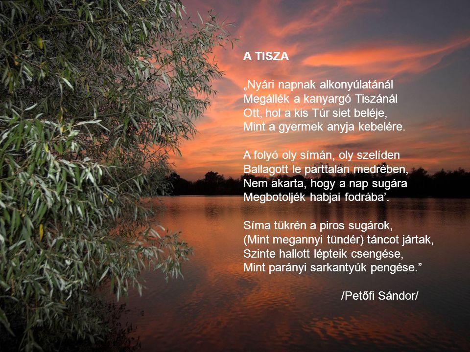 """A TISZA """"Nyári napnak alkonyúlatánál Megállék a kanyargó Tiszánál Ott, hol a kis Túr siet beléje, Mint a gyermek anyja kebelére. A folyó oly símán, ol"""
