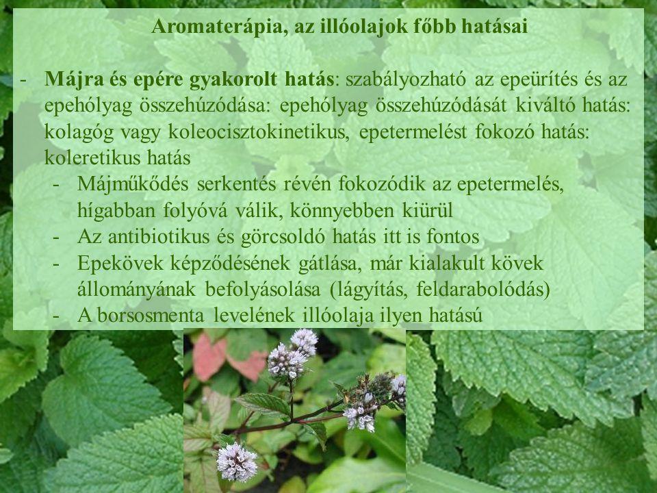 Aromaterápia, az illóolajok főbb hatásai -Májra és epére gyakorolt hatás: szabályozható az epeürítés és az epehólyag összehúzódása: epehólyag összehúz