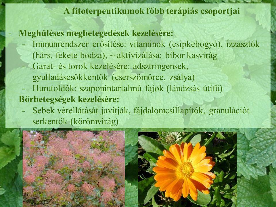 A fitoterpeutikumok főbb terápiás csoportjai -Meghűléses megbetegedések kezelésére: -Immunrendszer erősítése: vitaminok (csipkebogyó), izzasztók (hárs