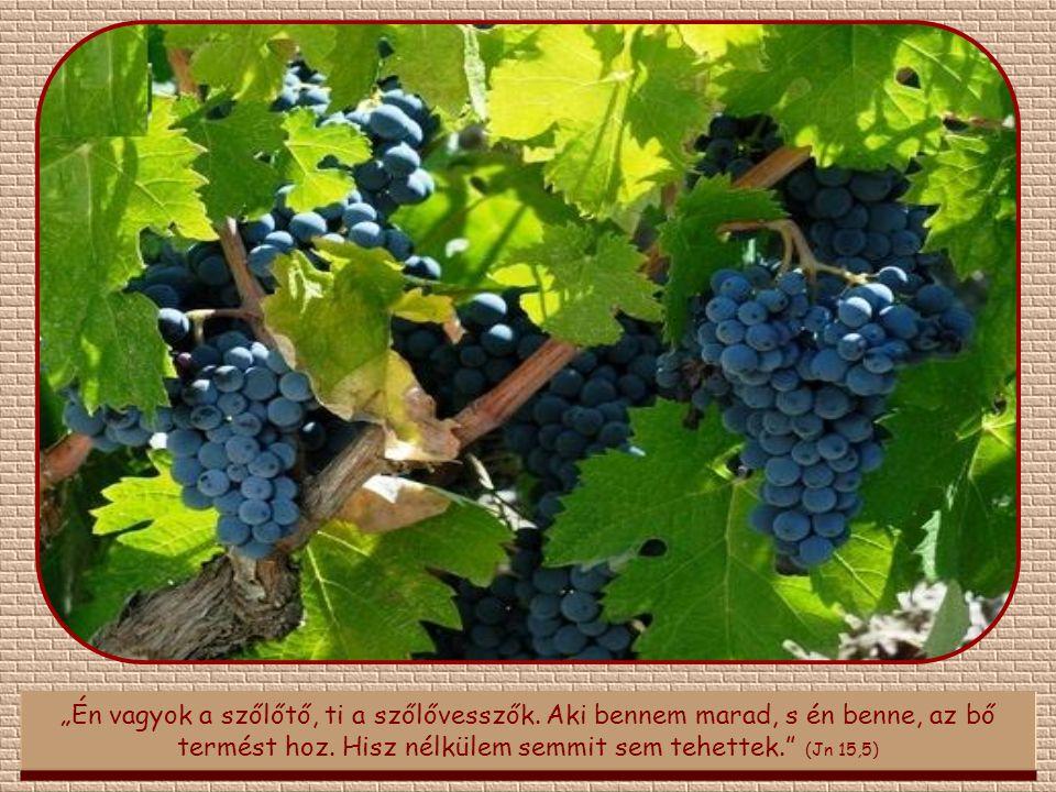 """""""Én vagyok a szőlőtő, ti a szőlővesszők.Aki bennem marad, s én benne, az bő termést hoz."""