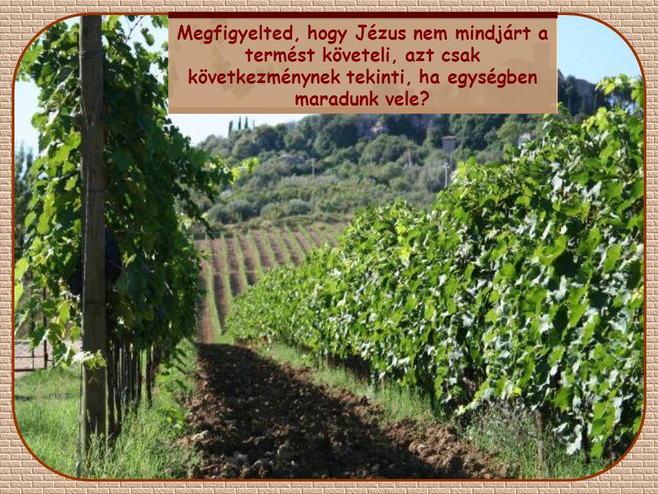 """""""Én vagyok a szőlőtő, ti a szőlővesszők. Aki bennem marad, s én benne, az bő termést hoz. Hisz nélkülem semmit sem tehettek."""""""