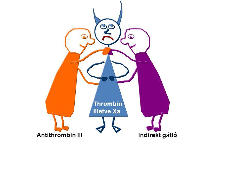 Thrombin Illetve Xa Antithrombin IIIIndirekt gátló