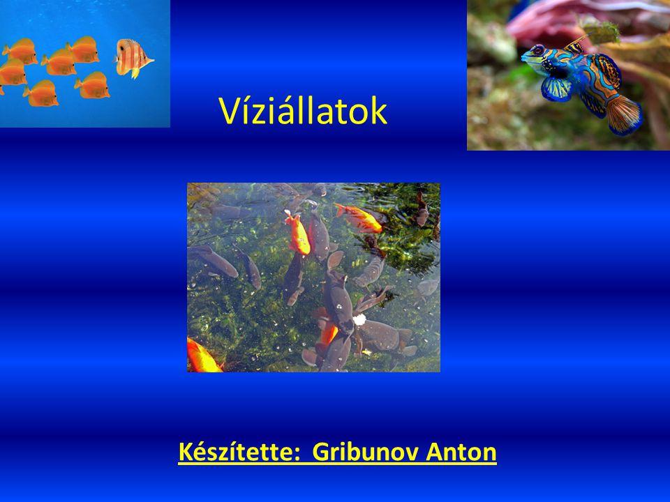 Víziállatok Készítette: Gribunov Anton