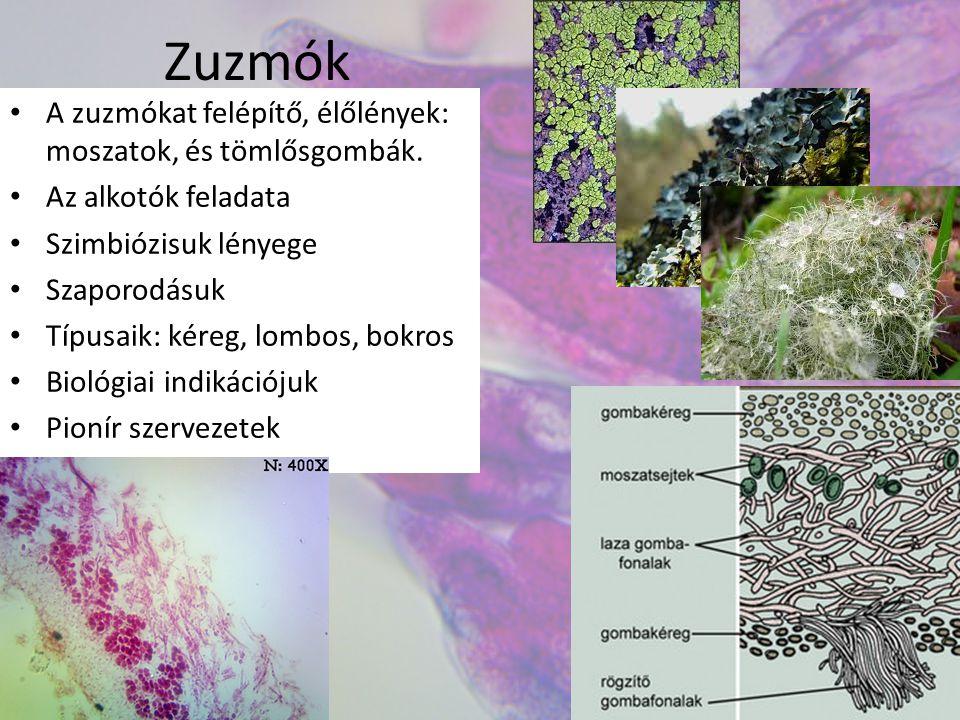Zuzmók A zuzmókat felépítő, élőlények: moszatok, és tömlősgombák. Az alkotók feladata Szimbiózisuk lényege Szaporodásuk Típusaik: kéreg, lombos, bokro