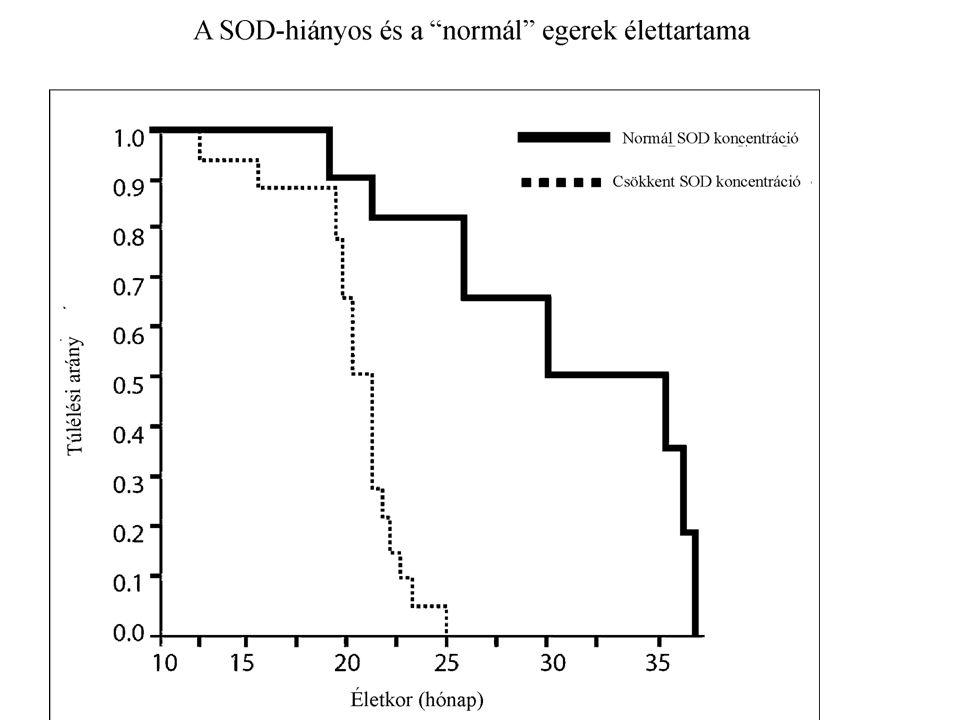 """Xeroderma pigmentosum Gyakorisága 1 : 250.000 Genetikai hiba miatt a """"kivágás-javítás mechanizmussal történő DNS javítási képességének a hiánya Rosszindulatú bőrtumorok gyakran már 5 éves kor előtt Basaliomák, laphám carcinomák, rosszindulatú melanomák Gyakran a szaruhártya homályával kezdődő vaksággal társul (ált.70 év körüliekben)"""