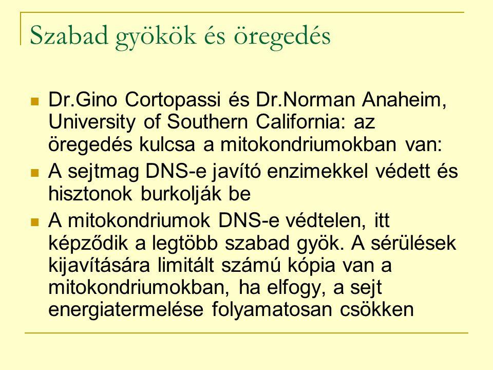 Szabad gyökök és öregedés Dr.Gino Cortopassi és Dr.Norman Anaheim, University of Southern California: az öregedés kulcsa a mitokondriumokban van: A se