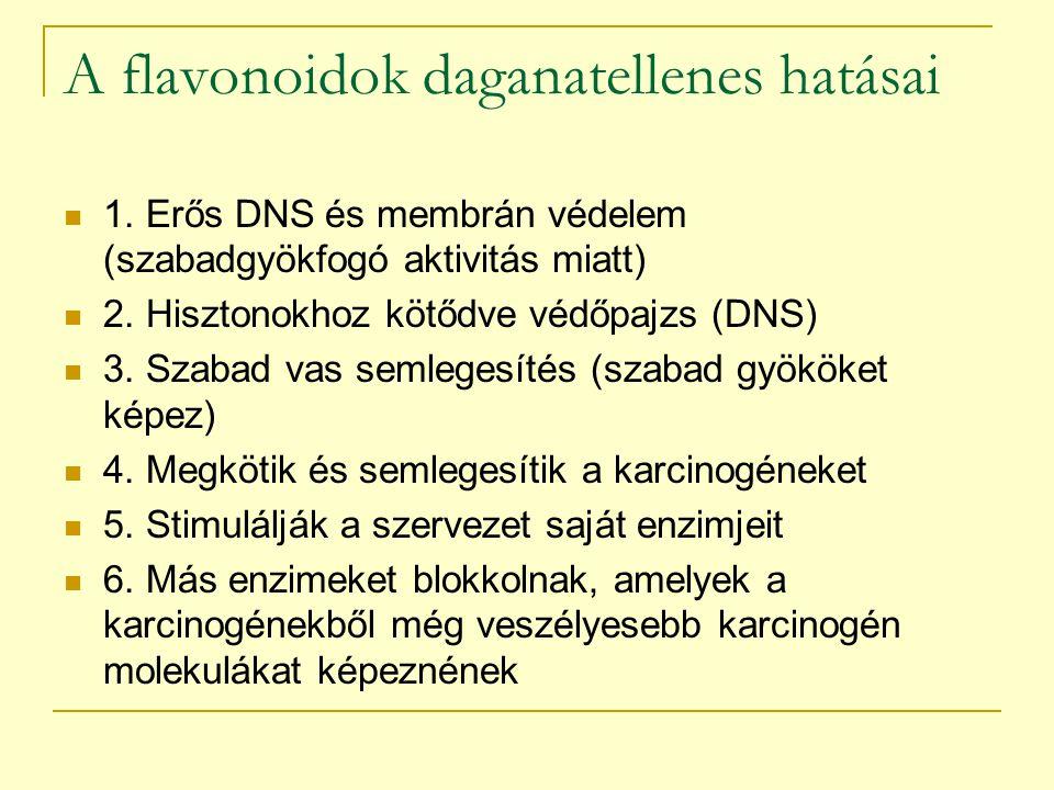 A flavonoidok daganatellenes hatásai 1. Erős DNS és membrán védelem (szabadgyökfogó aktivitás miatt) 2. Hisztonokhoz kötődve védőpajzs (DNS) 3. Szabad