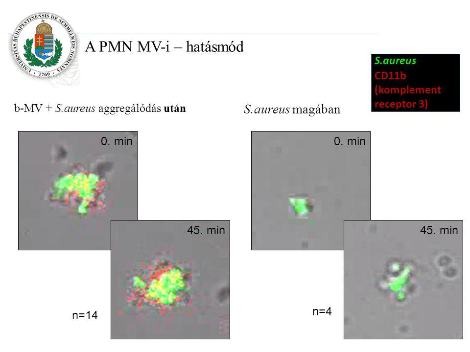 A PMN MV-i – hatásmód n=14 n=4 0. min 45. min 0.