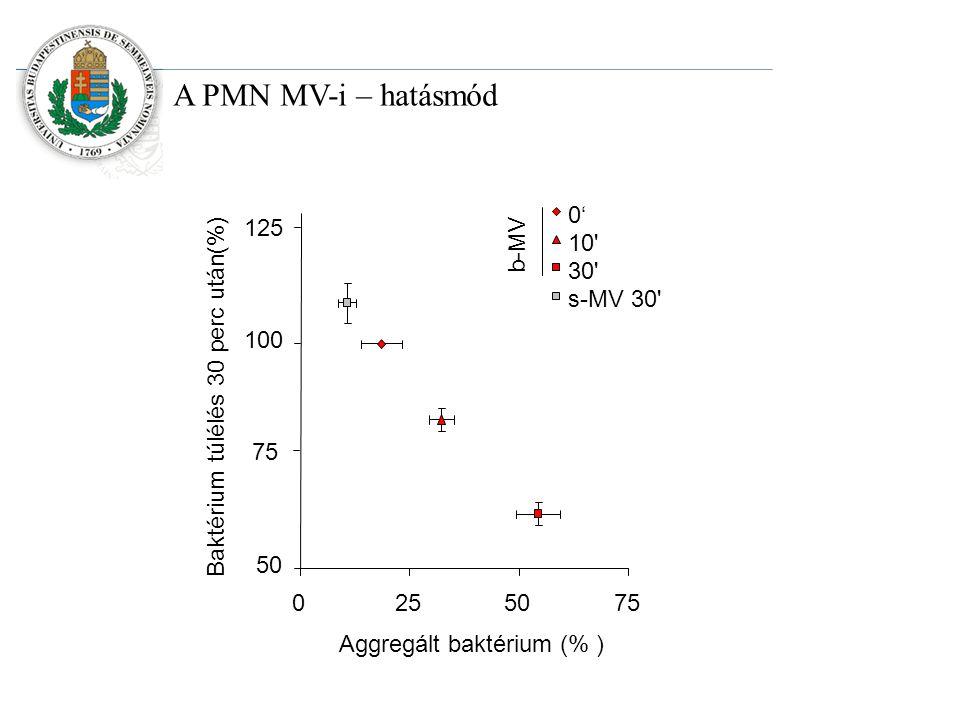 0' 10 30 s-MV 30 b-MV 50 100 125 0255075 Aggregált baktérium (% ) Baktérium túlélés 30 perc után(%) 75
