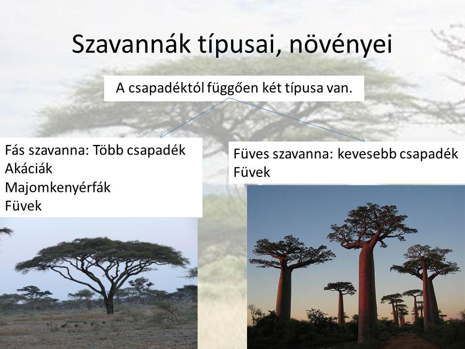 Szavannák típusai, növényei A csapadéktól függően két típusa van. Fás szavanna: Több csapadék Akáciák Majomkenyérfák Füvek Füves szavanna: kevesebb cs