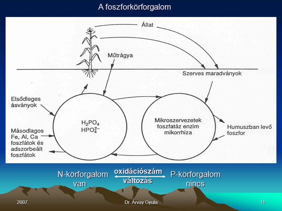 2007.Dr. Árvay Gyula11 N-körforgalom oxidációszám P-körforgalom van változás nincs A foszforkörforgalom