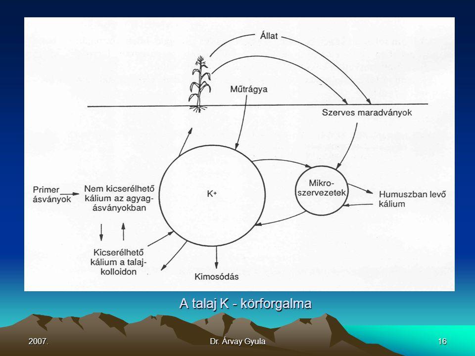 2007.Dr. Árvay Gyula16 A talaj K - körforgalma