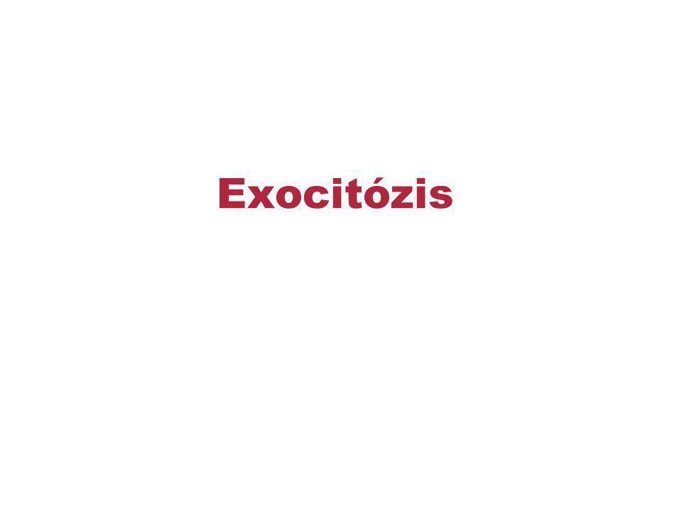 Exocitózis