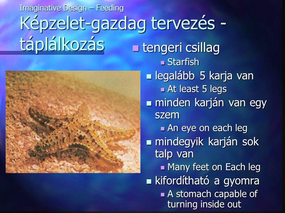 Imaginative Design – Feeding Képzelet-gazdag tervezés - táplálkozás tengeri csillag tengeri csillag Starfish Starfish legalább 5 karja van legalább 5 karja van At least 5 legs At least 5 legs minden karján van egy szem minden karján van egy szem An eye on each leg An eye on each leg mindegyik karján sok talp van mindegyik karján sok talp van Many feet on Each leg Many feet on Each leg kifordítható a gyomra kifordítható a gyomra A stomach capable of turning inside out A stomach capable of turning inside out