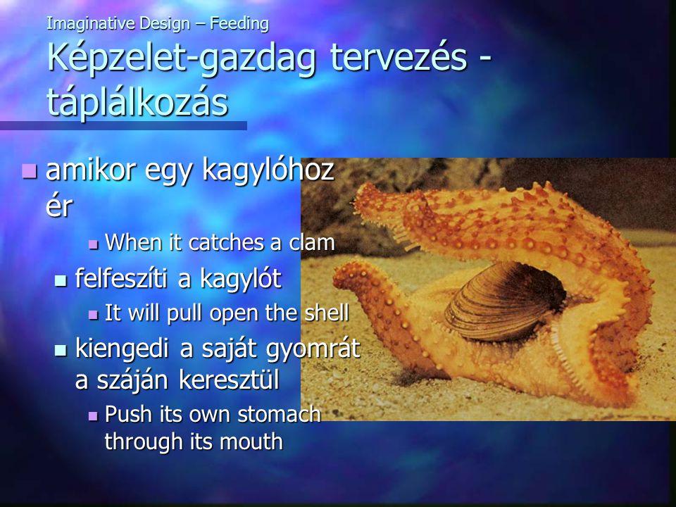 Imaginative Design – Feeding Képzelet-gazdag tervezés - táplálkozás amikor egy kagylóhoz ér amikor egy kagylóhoz ér When it catches a clam When it catches a clam felfeszíti a kagylót felfeszíti a kagylót It will pull open the shell It will pull open the shell kiengedi a saját gyomrát a száján keresztül kiengedi a saját gyomrát a száján keresztül Push its own stomach through its mouth Push its own stomach through its mouth