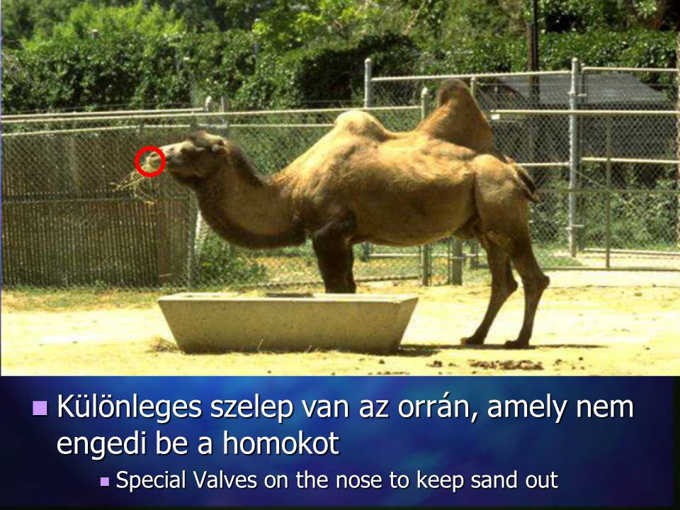 Különleges szelep van az orrán, amely nem engedi be a homokot Különleges szelep van az orrán, amely nem engedi be a homokot Special Valves on the nose to keep sand out Special Valves on the nose to keep sand out