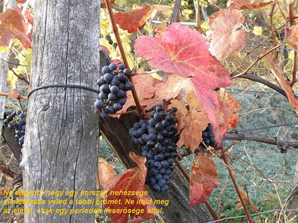 Ha elkeseredsz a tél idején, megfeledkezhetsz a tavasz igéretéről, a nyár széségéről, és az ősz bőségéről.