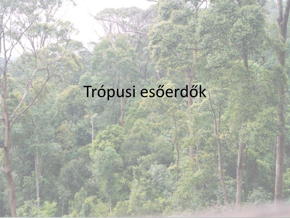Biomok a Földön 1.Biomok definíciója (ismétlés) 2.Biomok típusai – Trópusi esőerdő – Lombhullató trópusi erdő – Szavanna – Trópusi sivatag – Szubtrópusi erdők – Mérsékelt övi lombhullató erdők – Füves puszták – Tajga – Tundra – Állandóan fagyott területek – Hideg tengerek – Meleg tengerek