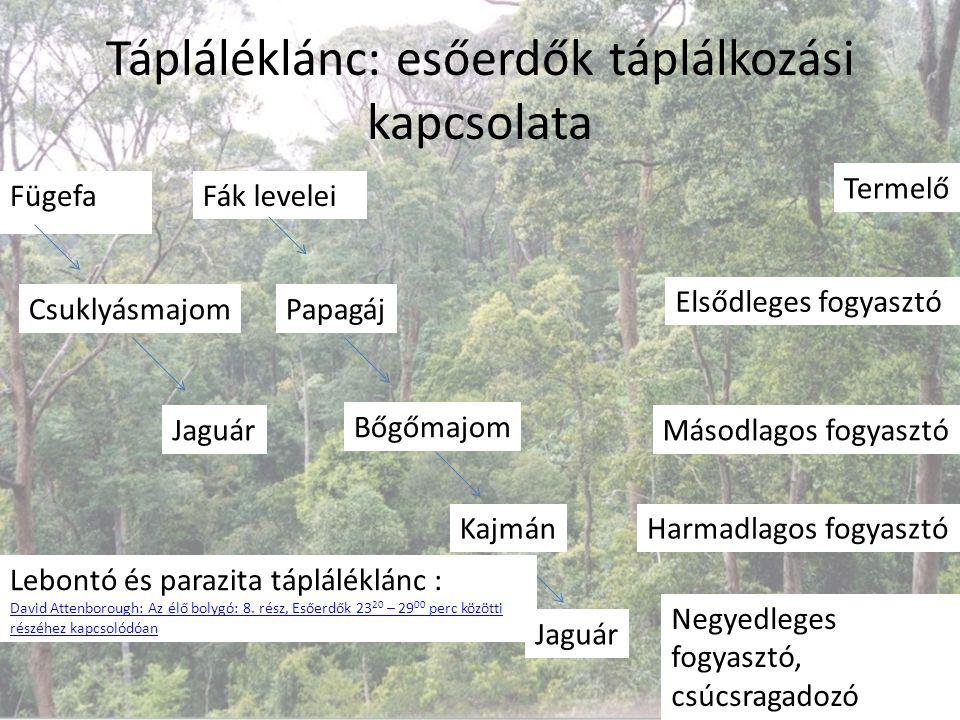 Tápláléklánc: esőerdők táplálkozási kapcsolata Fügefa Csuklyásmajom Jaguár Termelő Elsődleges fogyasztó Másodlagos fogyasztó Fák levelei Papagáj Bőgőm